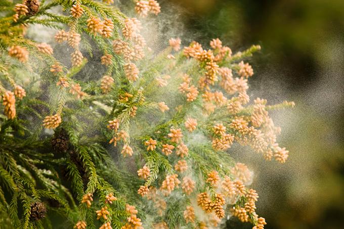 春の花粉対策!会議室内に花粉を持ち込ませない方法